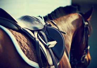 pan-vet-at-the-18th-annual-equine-conference
